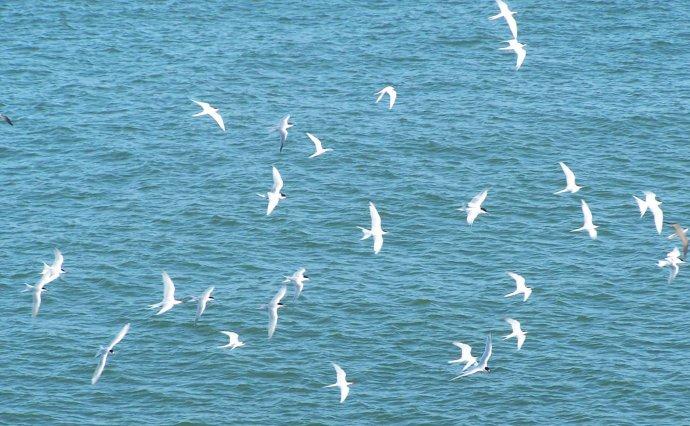 你看过大海,但看过这么自然漂亮的海吗?我的海岛家乡
