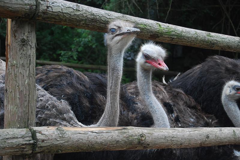 贵阳森林野生动物园之旅