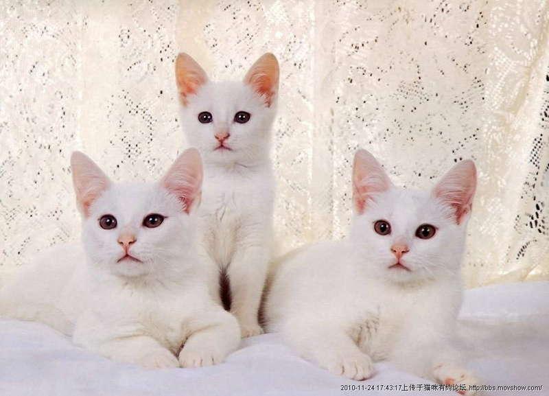 壁纸 动物 猫 猫咪 小猫 桌面 800_577