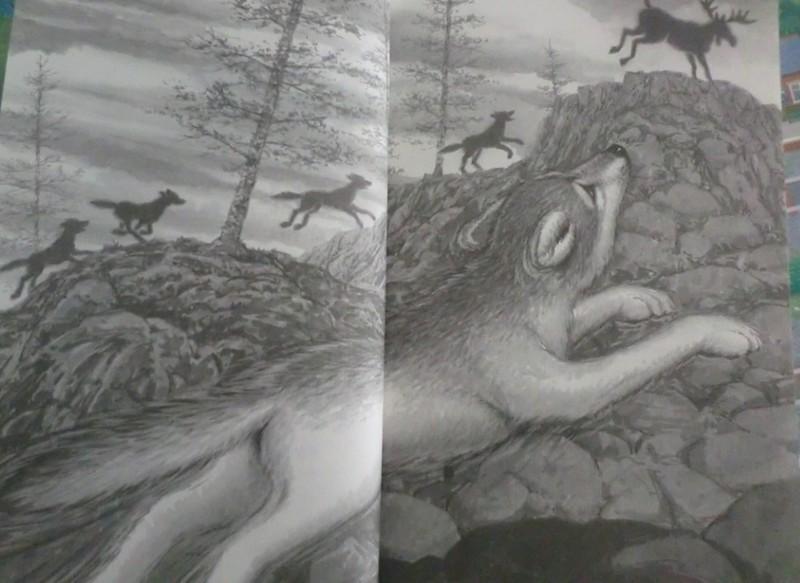 狼有狼道——读《绝境狼王》