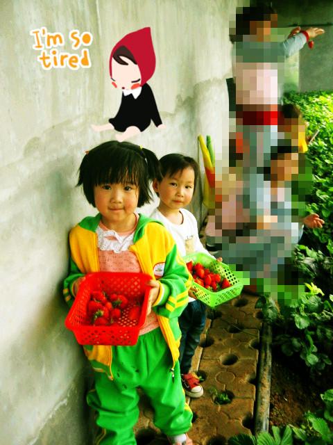 幼儿园摘草莓活动