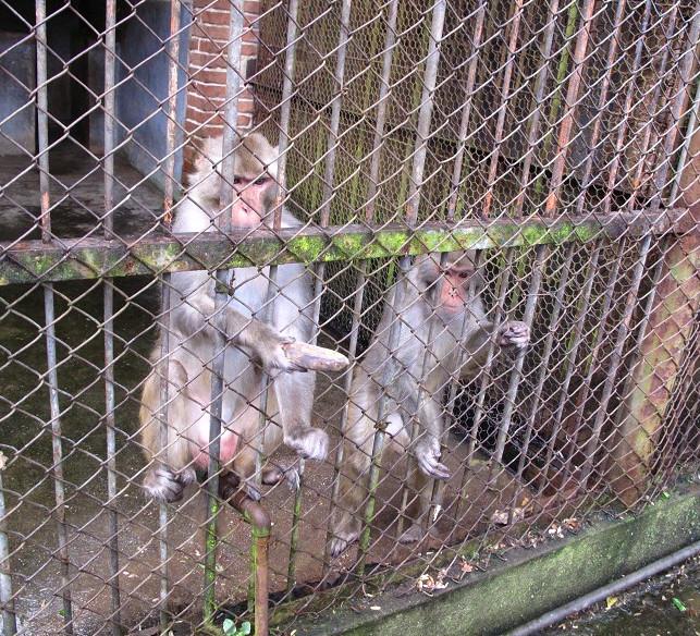 个旧动物园游记图片