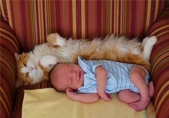 而饲养小动物,因为小动物更为弱小和需要照顾,这就可以让孩子在饲养和