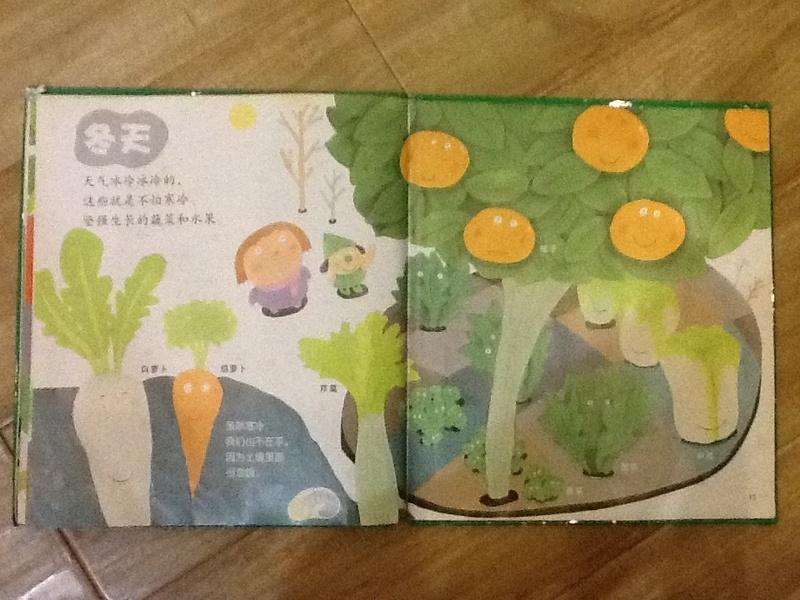 胡萝卜的成长过程