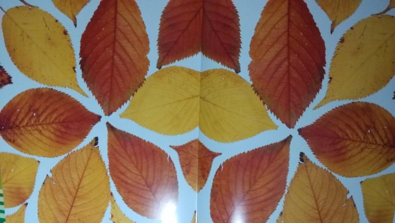 树叶作画,特别有趣.用秋天的黄叶做,色彩比较好看.
