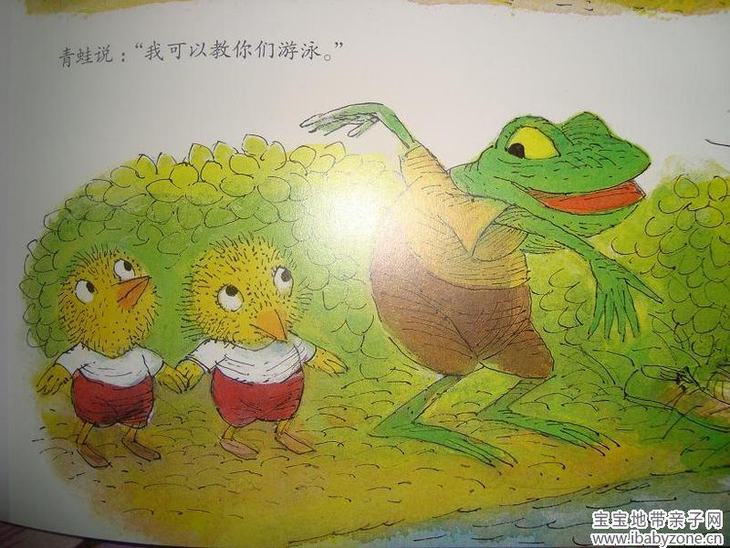 青蛙要教小鸡游泳