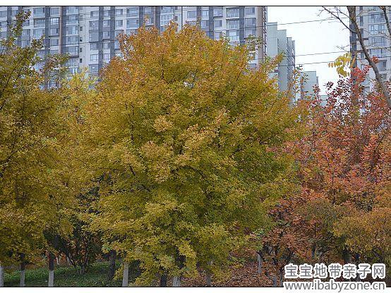 抓住秋天的尾巴——奥森公园美丽的风景 - 宝宝地带