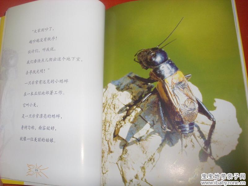 法布尔《昆虫记》---蟋蟀