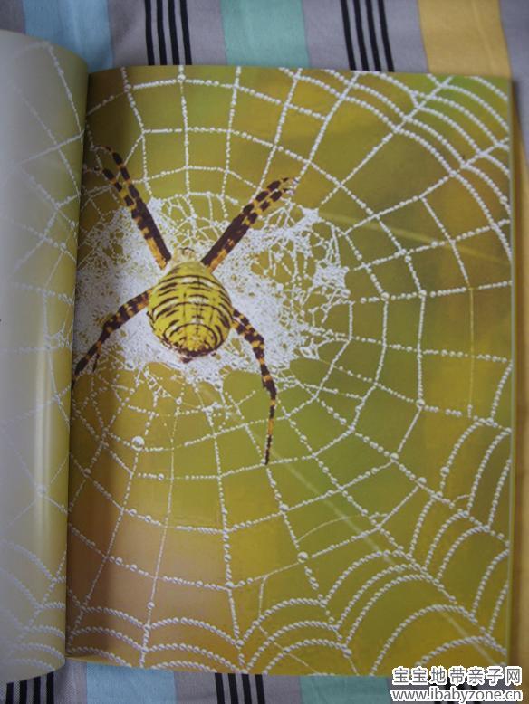 工精细的蜘蛛网》