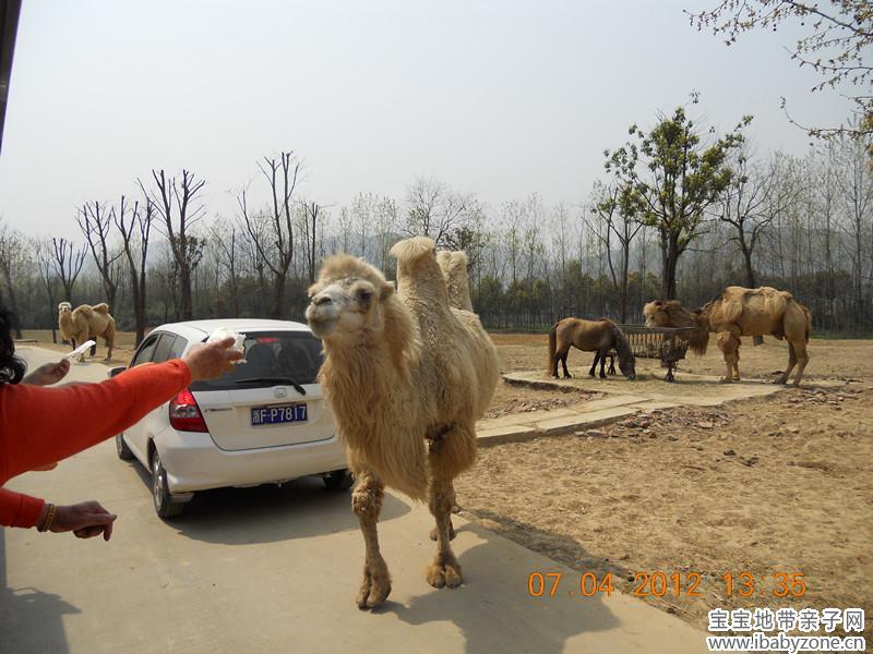 杭州野生动物园图片_杭州春芽实验学校图片