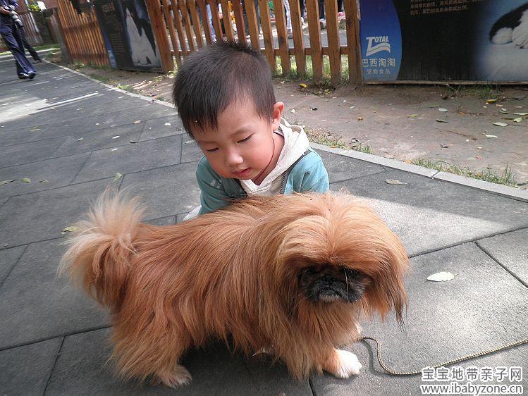 宝宝眼中的小动物+小动物一直是我的好朋友+我爱珠珠