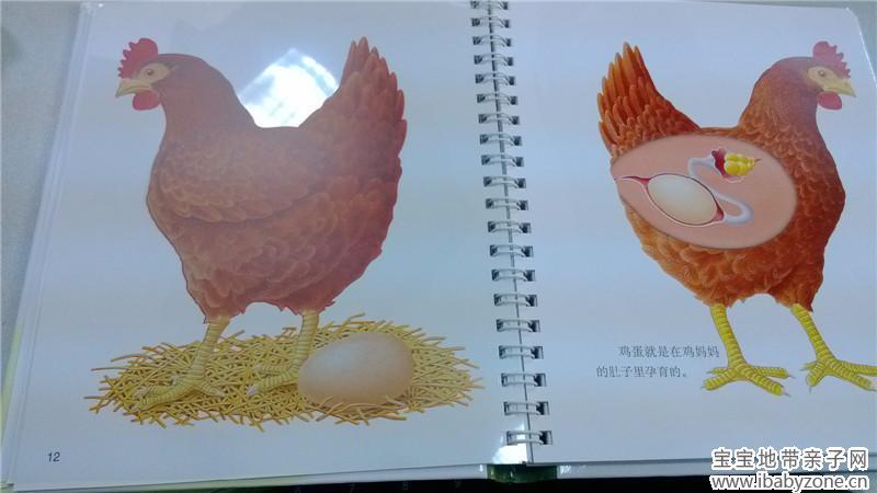 《第一次发现丛书》之蛋的秘密-小动物的出生