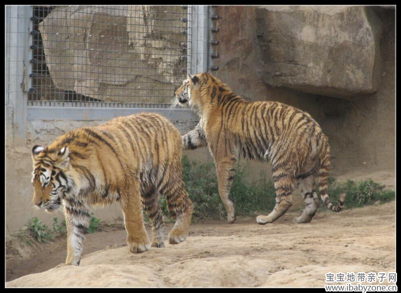 下一次再来,小狮子应该长得很大了吧,很期待,同时也有一种一同成