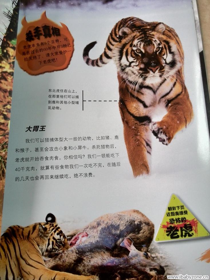 里面还有动物们在真实的场景下捕猎的图片